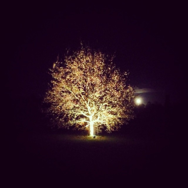 Moon and tree at Westonbirt