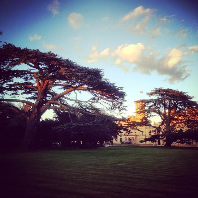 Cedar Trees at Osborne House #cedartrees #osbornehouse #Englishheritage #gardenphotography