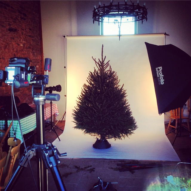 Shooting Christmas trees in March #Christmastree #gardenphotography