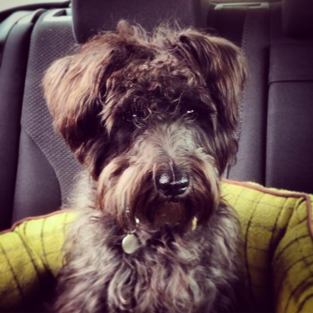 Car trip for Teddy