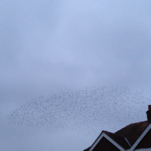 Mumuration in Hereford town centre #mumuration