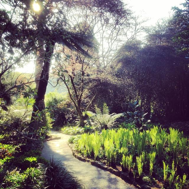Trelissick Garden #gardenphotography #nationaltrust #trelissick