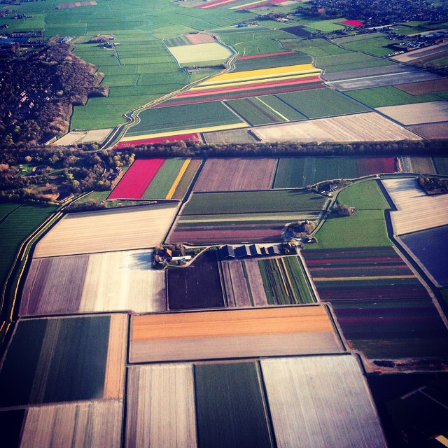Flower fields of Holland from the air #tulips #amsterdam #holland #gardenphotography