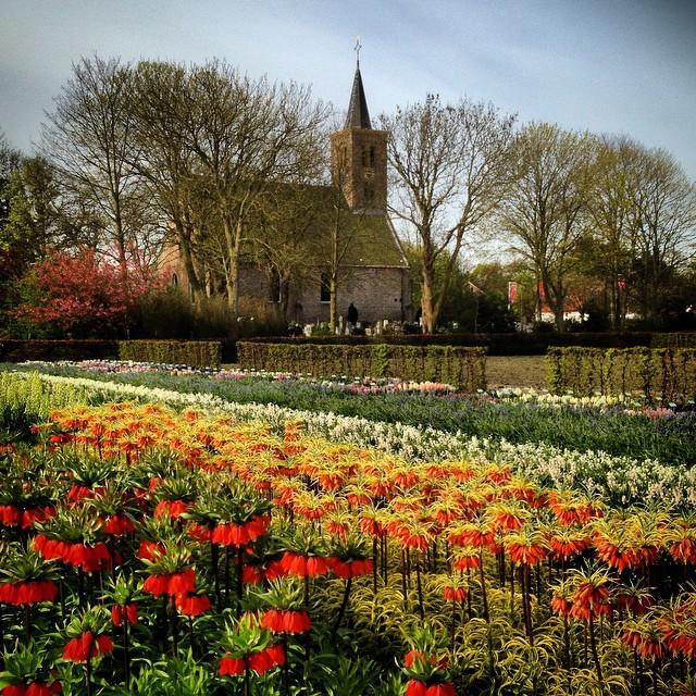 Fritillaria imperialis at Hortus Bulborum #gardenphotography #holland #hortusbulborum #Fritillariaimperialis