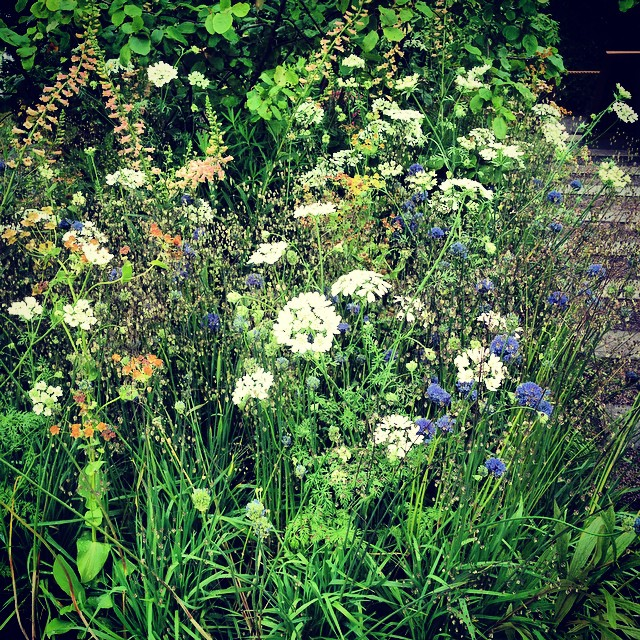 Beautiful Meadow planting by Adam Frost at BBC Gardeners' World Live, Orlaya Grandiflora, Allium Caeruleum Azureum, Digitalis 'Glory of Roundway', Briza Media #Meadows #GWLive #BBCGWLive #gardenphotography