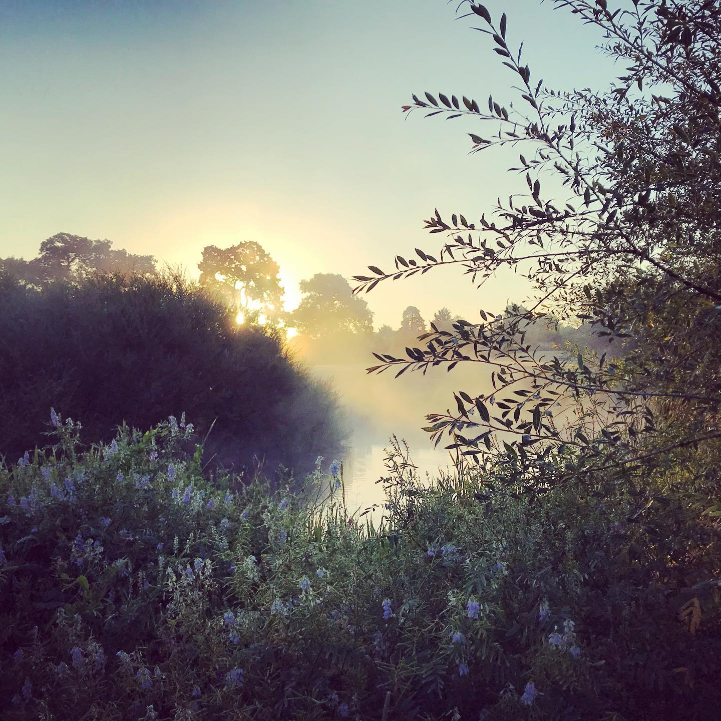 Early morning misty Sunrise around the lake on my shoot this morning ...#gardenphotography #gardenphotographer #sunrise #misty #mist #shotoniphone