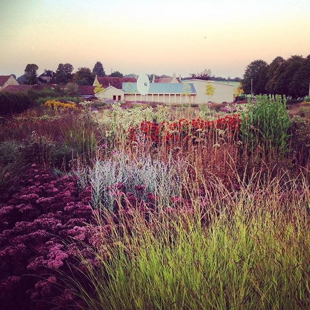 Sunrise at Piet Oudolf's Garden - Hauser and Wirth #pietoudolf #gardenphotography #hauserwirth