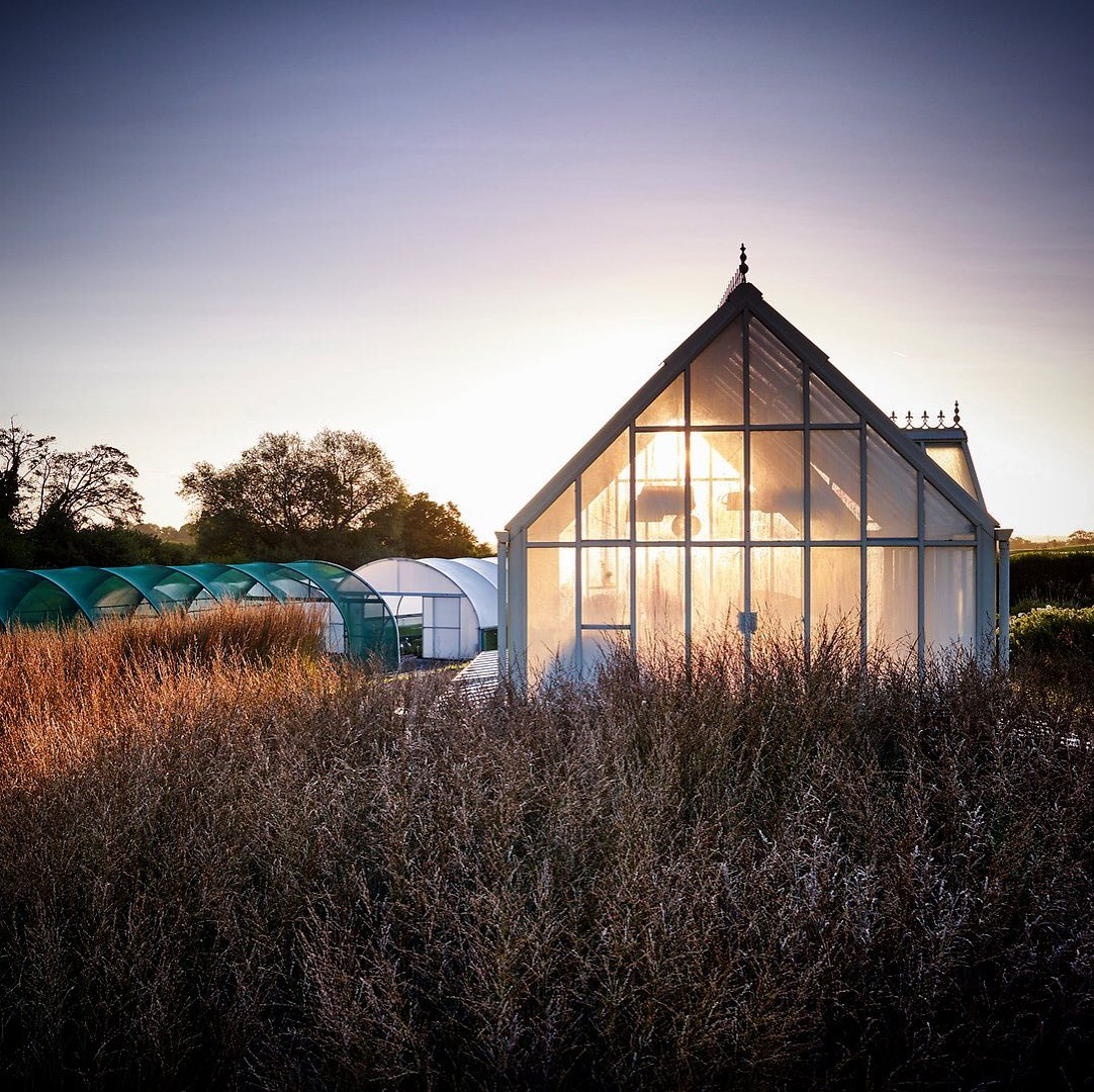 One from the archive shot @arvensisperennials for @gardens_illustrated ...#gardenphotography #gardenphotographer #arvensisperennials #gardensillustrated #phaseonephoto #greenhouse #sunrise #firstlight
