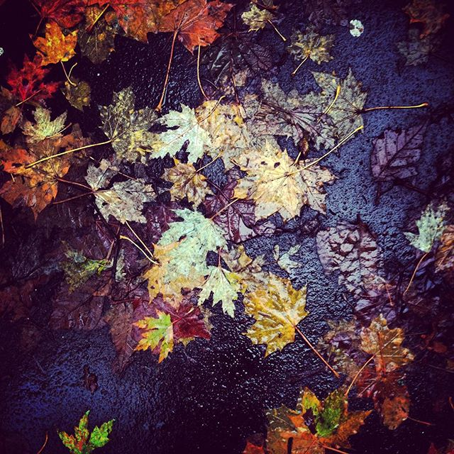 Autumn leaves  #autumn
