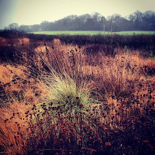 Seed heads and warm tones at Hauser & Wirth Garden. #gardenphotography #pietoudolf #hauserandwirth #somerset #dursladefarm