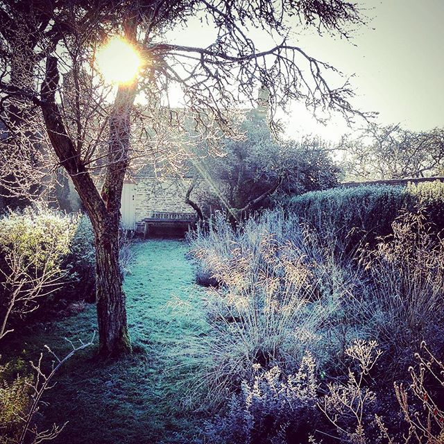 Another beautiful frosty morning #gardenphotography #frozen #frosty #sunrise #winter #gardensillustrated