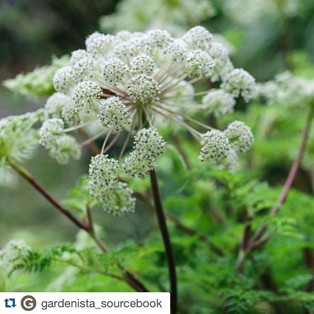 #Repost @gardenista_sourcebook with @repostapp.・・・A lovely visit to #derrywatkins for tips on how to grow her #specialplants (thanks for the report @kendrapagewilson and @jasoningram )