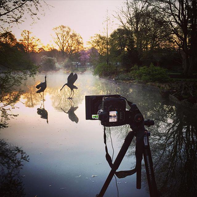Sunrise at RHS Wisley #behindthecamera #rhswisley #sunrise #sevenacres #rhs