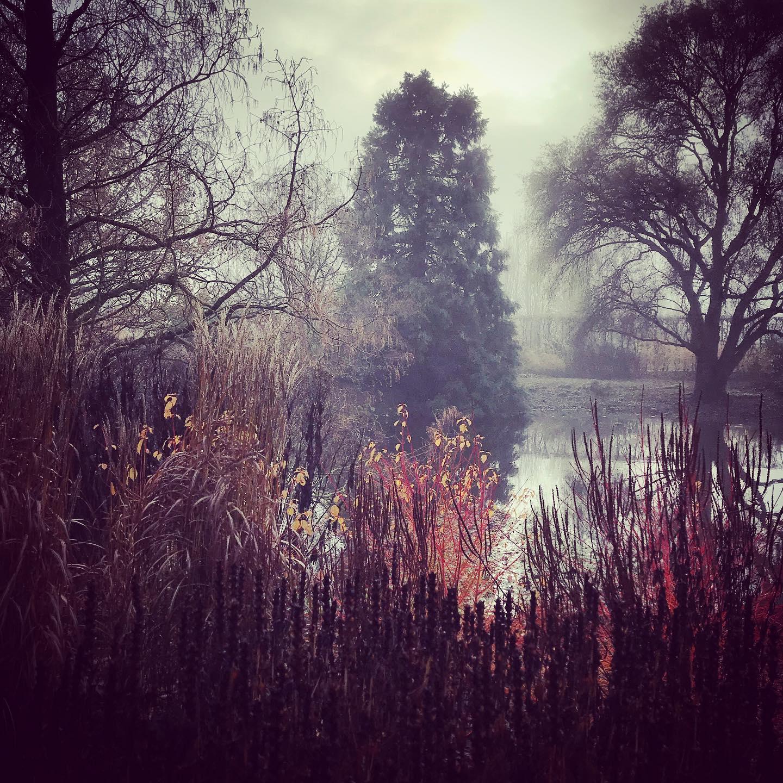 Warm tones @rhshydehall ...#gardenphotography #gardenphotographer #rhs #rhshydehall #wintergarden