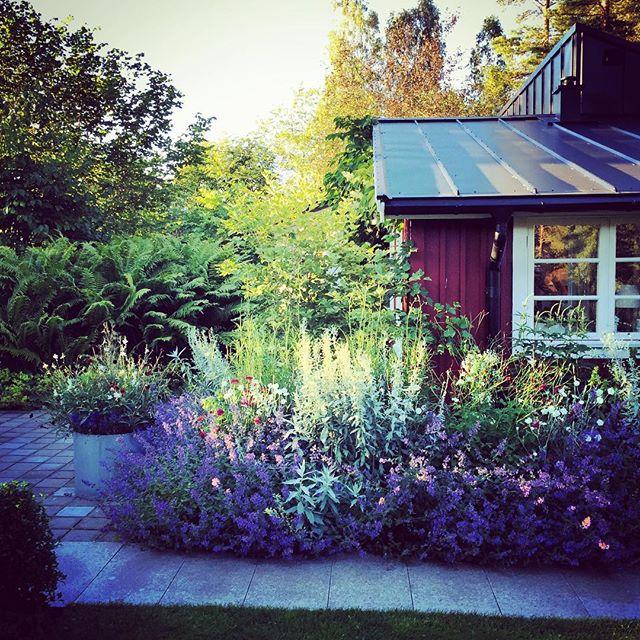 Ulf Nordfjell #gardenphotography #sweden #ulfnordfjell