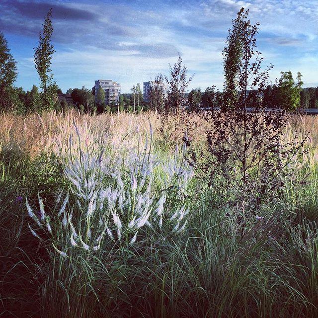 Skellefteå Park #ulfnordfjell #sweden #skellefteåparken #gardenphotography