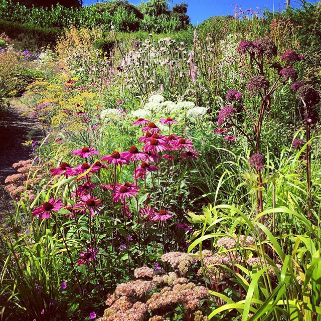 Dove Cottage Nursery & Garden #dovecottagenursery #halifax #gardenphotography