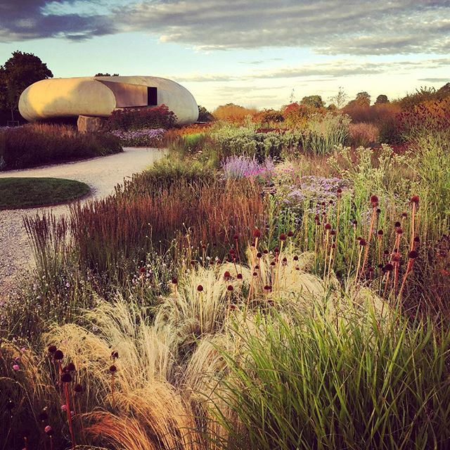 Oudolf Field at last light #pietoudolf #oudolffield #gardenphotography #hauserandwirth #lastlight