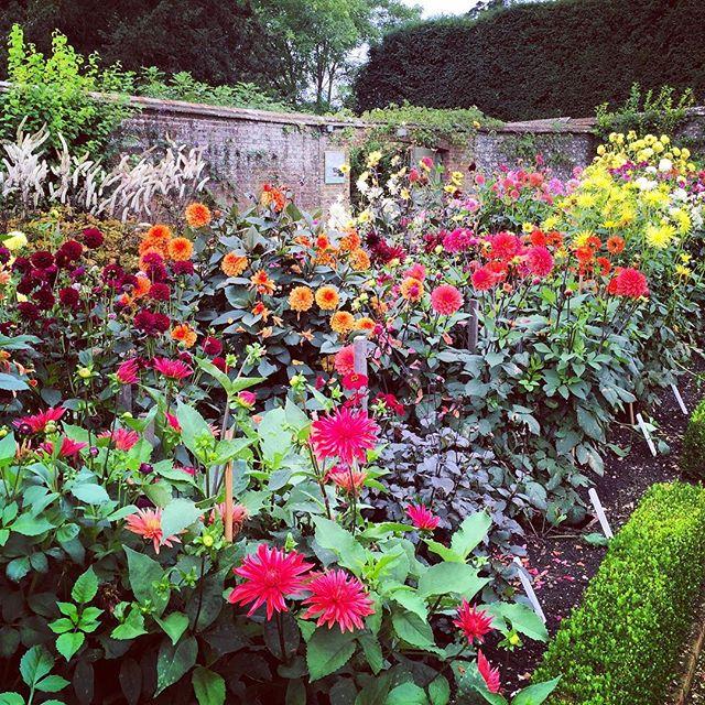 Dahlias at West Dean Gardens #westdeangardens #gardenphotography #dahlias