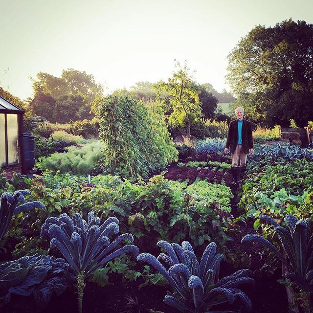 Sunrise with @charles_dowding on his incredibly productive plot. #gardenphotography #charlesdowding #gardeningwhich #sunrise #ediblegardens #nodig