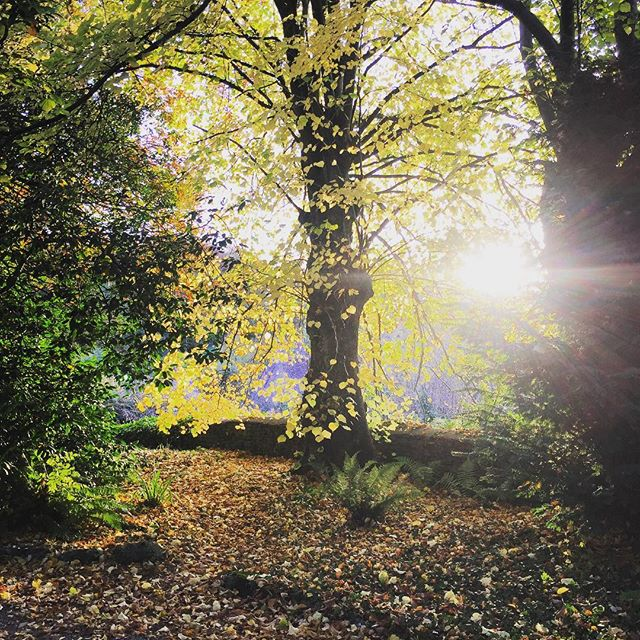 Autumn #sunrise #gardenphotography #autumn