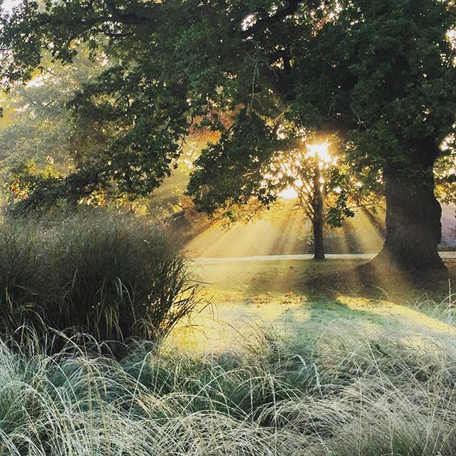 Early morning mist over the grasses at sunrise #autumn #gardenphotography #grasses #sunrise #mist #earlymorning