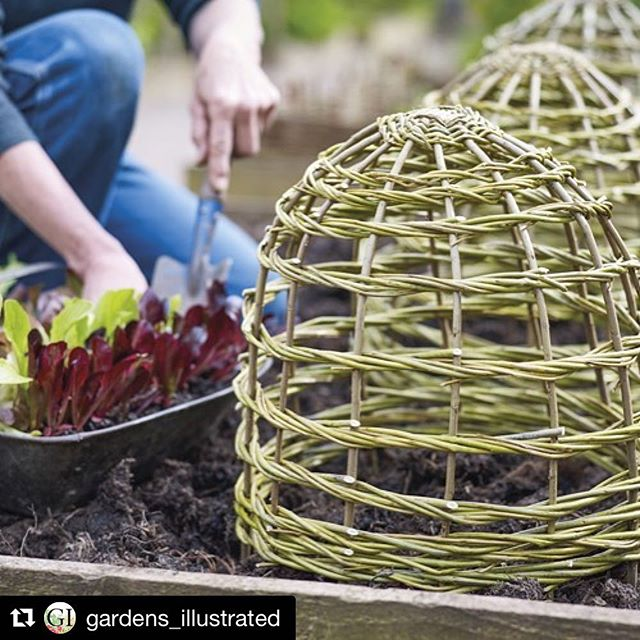 #Repost @gardens_illustrated with @repostapp・・・It's time to start thinking about support and protection for next season's growth. Pick up the February issue of @gardens_illustrated to find out how to make your own natural garden structures. Photo by @jasoningram....#springiscoming #plantsupport #plantprotection #willow #naturalstyle #gardening #growyourown