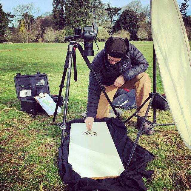 Field photography at Westonbirt Arboretum #gardenphotography #fieldphotography #botanical #westonbirtarboretum @georgebale