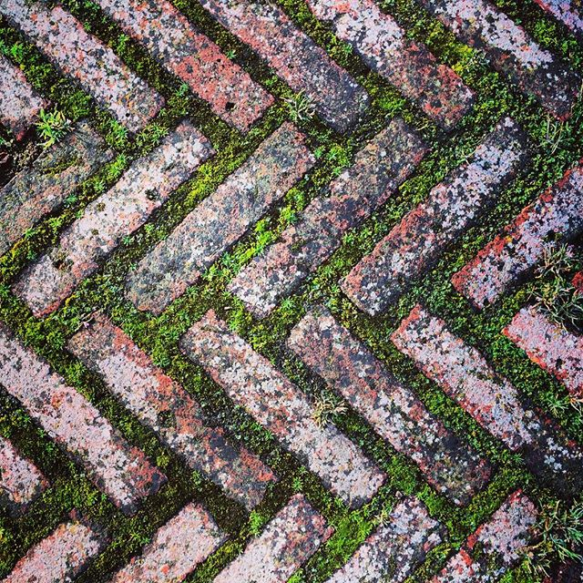 Beautiful Herringbone path with moss #gardenphotography #herringbonepath #moss #spring #herringbone