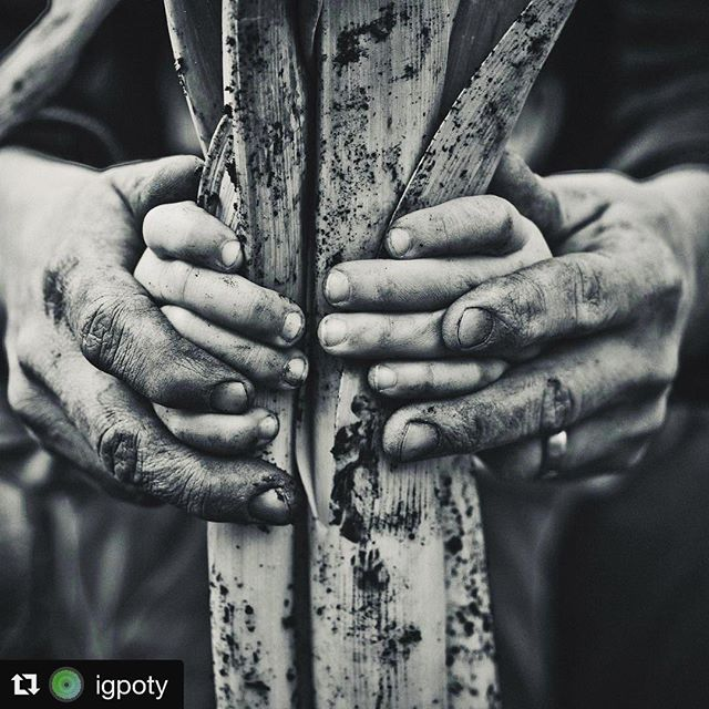 #Repost @igpoty・・・Black & white has an amazing ability to display emotion. This is from a portfolio by Jason Ingram in Competition 4. Show us what you can do! Deadline for black & white is March 31st! £500 for 1st place. Enter at igpoty.com#competition #naturelovers #natureza #gardenphotography #garden #flower #flowers #growyourown #plant #igpoty #nature