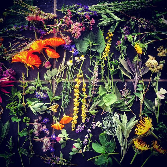 Shooting herbs #organicherbtradingcompany #gardenphotography #herbs