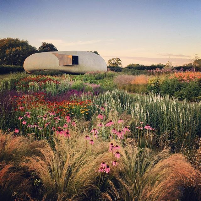 Last light on the Piet Oudolf field #hauserandwirth #hauserandwirthsomerset #pietoudolf #gardenphotography