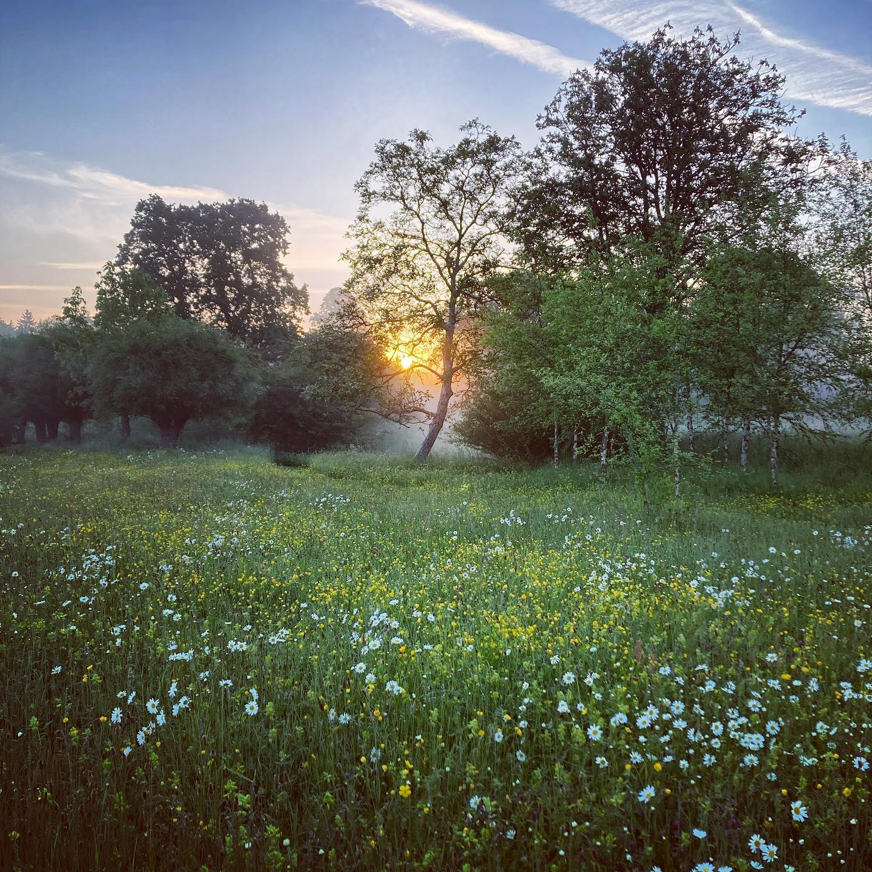 Early morning meadow ...#gardenphotography #gardenphotographer #meadow #englishgarden #shotoniphone #sunrise