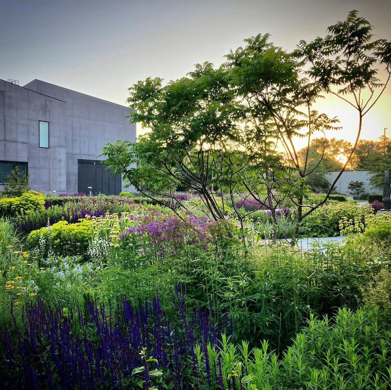 The Hepworth Wakefield Gallery Garden at Sunrise...#gardenphotography #gardenphtographer #hepworthwakefieldgarden #hepworthwakefield #englishgarden #tomstuartsmith #katymerringtonculturalgardener #sunrise
