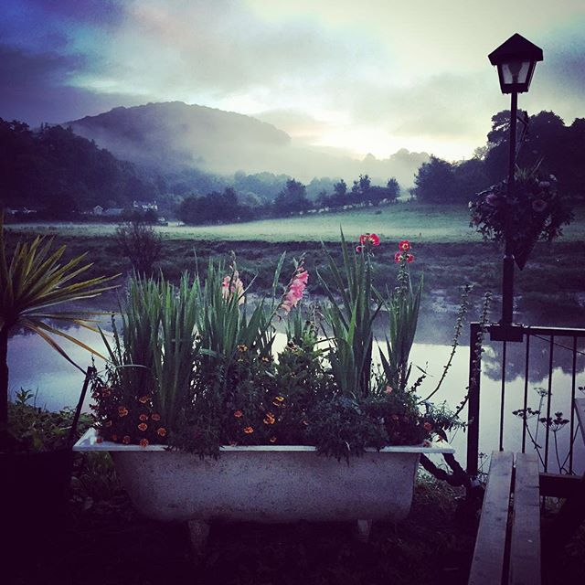 Bath planter at sunrise on the River Wye #gardenphotography #riverwye #sunrise #mist #tintern