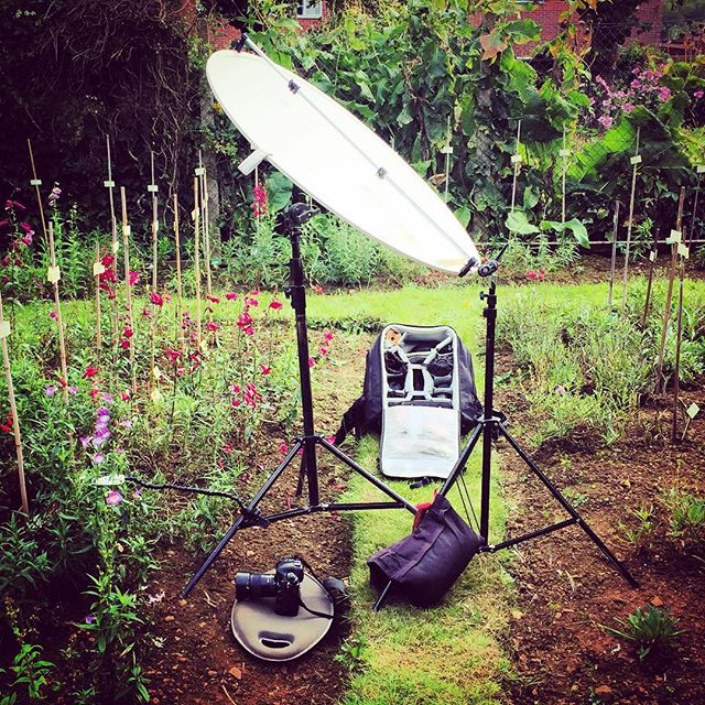 Behind the scenes at today's shoot #gardenphotography #gardenphotographer #plamp #planttrials