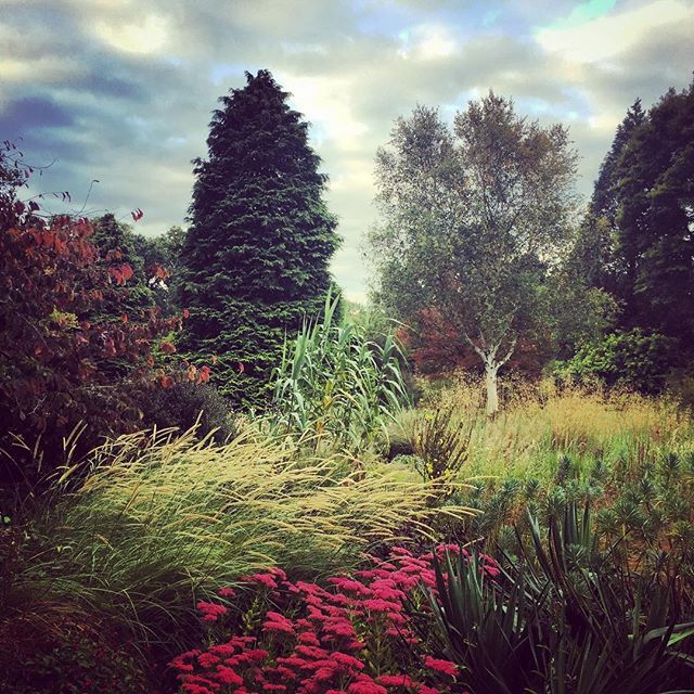 Shooting at the wonderful Knoll Gardens #grasses #gardenphotography #neillucas #knollgardens