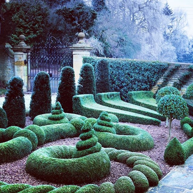 Beautiful topiary at Bourton House Garden #gardenphotographer #gardenphotography #bourtonhousegarden #topiary #winterstructure #cotswolds #cotswoldgardens