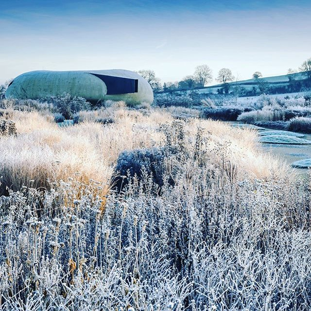 Piet Oudolf field at Hauser & Wirth at first light #gardenphotography #gardenphotography #pietoudolf #hauserwirth #hauserwirthsomerset #oudolffield #wintergardens #dursladefarm