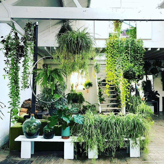 Today's very green studio setting #gardenphotography #claptontram #houseplants #houseplantstudio