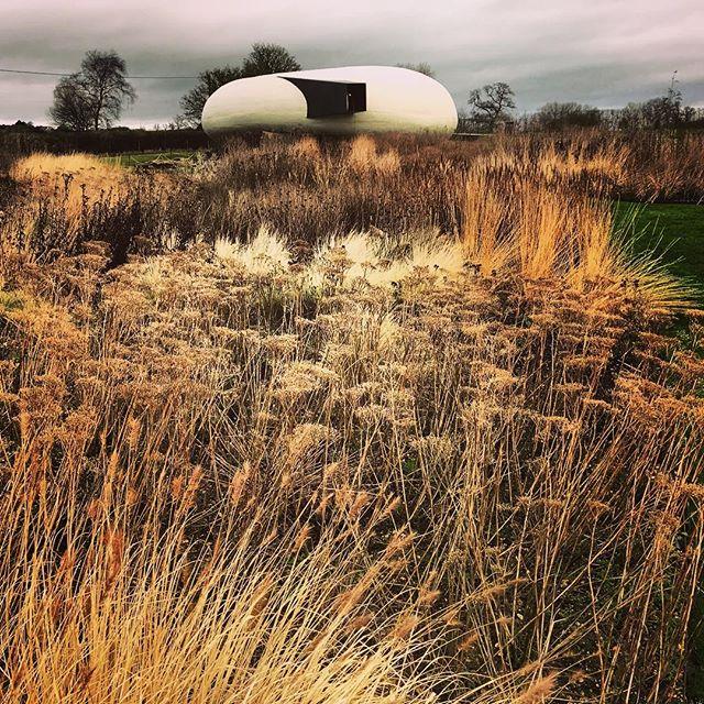 Beautiful warm golden tones in the Oudolf Field today at Hauser & Wirth @hauserwirth @pietoudolf @dursladefarmhouse #gardenphotography #gardenphotographer #pietoudolf #oudolffield #hauserwirth #hauserwirthsomerset #dursladefarm #winterstructure