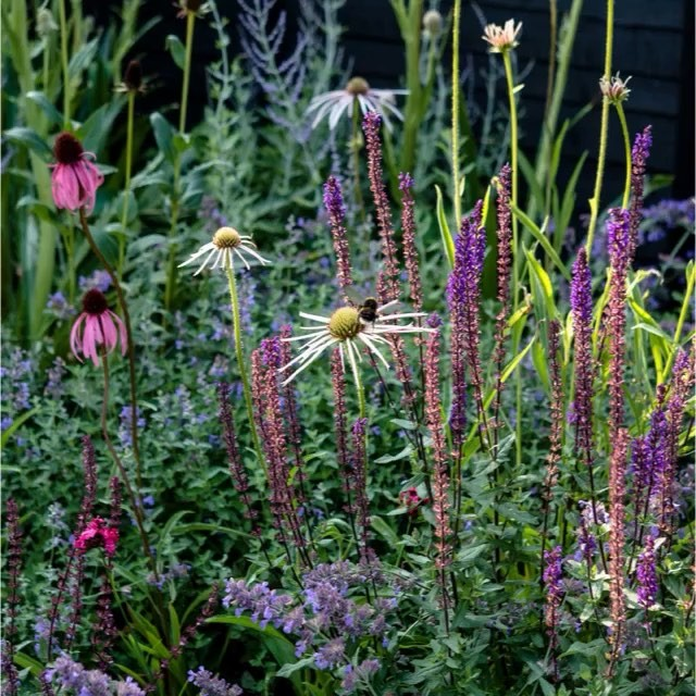 It's publication day for #brilliantandwild  by @lucy.bellamy and me. Always lovely to see the end results in glorious print, it's a beauty !  @pimpernel_press #gardenphotography #gardenphotographer #agardenfromscratchinayear #wildlifegardening #newperennialgarden