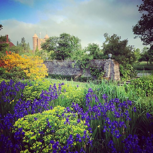 Irises in the early morning light at Sissinghurst  #sissinghurst #gardenphotography #gardenphotographer #irises