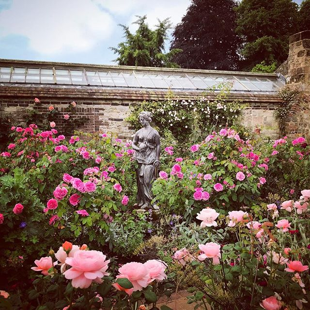 The Rose Garden at Parham Gardens is looking as beautiful as ever #gardenphotographer #gardenphotography #parhamhouseandgardens #roses #parhamgardens