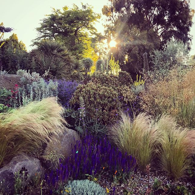 The Dry Garden at RHS Hyde Hall at Sunrise #gardenphotography #gardenphotographer #rhshydehall #rhshydehallgardens #drygarden #sunrise