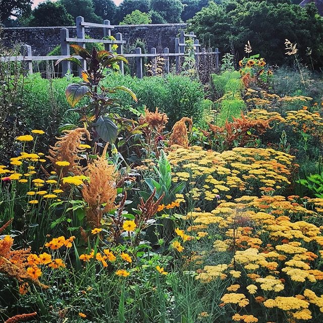 The Yellow Border @parham_house_gardens looking spectacular #gardenphotography #gardenphotographer #parhamhouseandgardens #yellowplanting