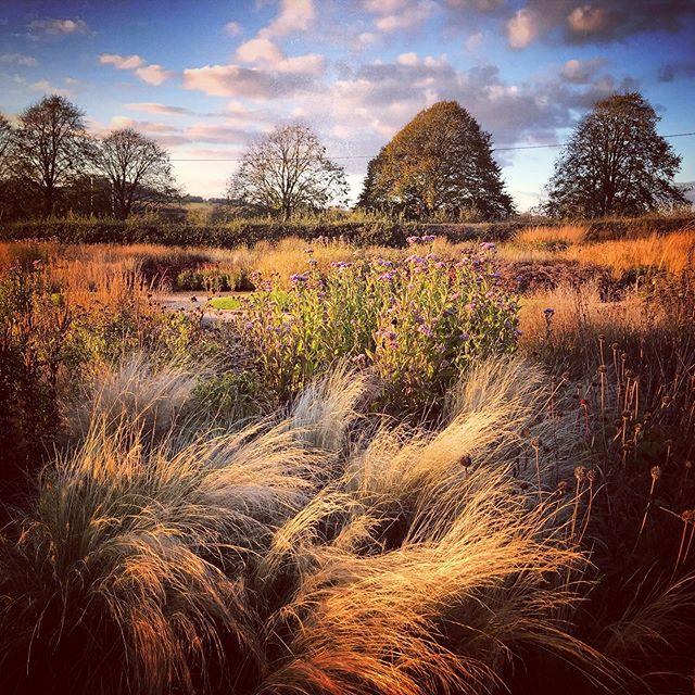 Evening shoot in the Oudolf Field @dursladefarmhouse #hauserandwirthsomerset #pietoudolf #dursladefarm #autumnlight #gardenphotography #gardenphotographer #oudolffield