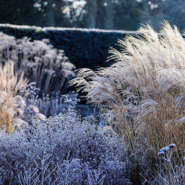 First post and it's a cold one ️️, planting by @coyotewillow Happy 2019 to everyone #gardenphotography #gardenphotographer #wintergarden #plantphotographer