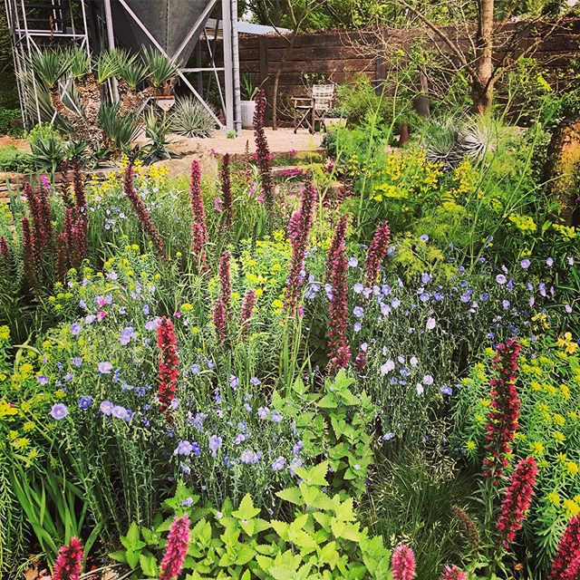 Lovely planting in The Resilience Garden by Sarah Eberle #rhschelsea2019 #chelseaflowershow2019 #crocus #saraheberle #gardenphotography #gardenphotographer