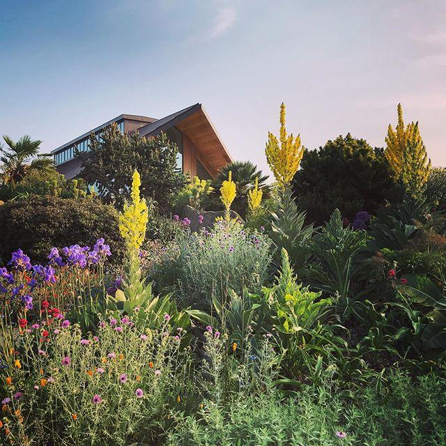 The Dry Garden @rhshydehall #gardenphotography #gardenphotographer #rhshydehall #drygarden